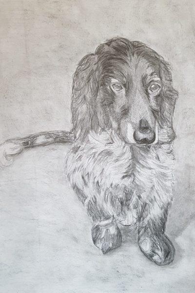 Auftragszeichnung Hund, 30 x 40 cm