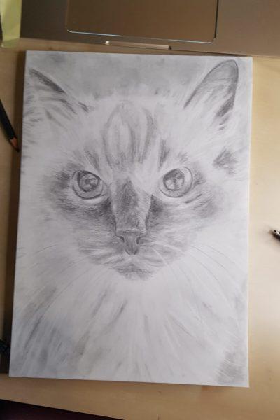 porträtzeichnungkatze